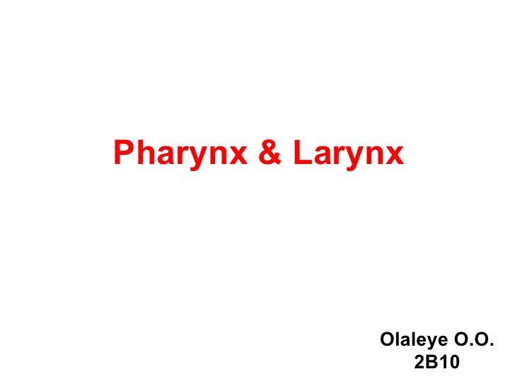 Pharynx & Larynx              Olaleye O.O.                  2B10