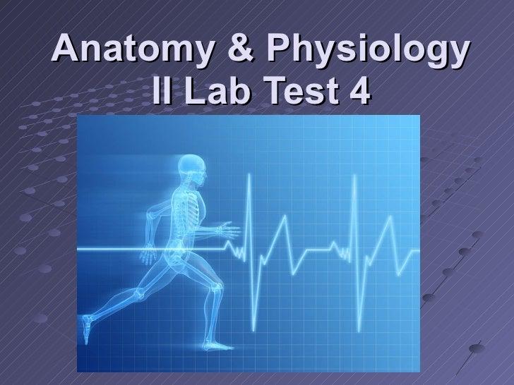 Anatomy & Physiology Ii Lab Test 4