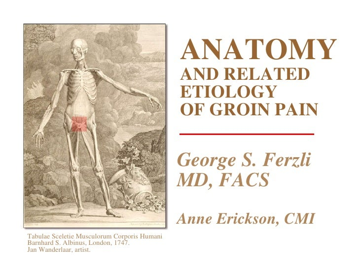 ANATOMY AND RELATED ETIOLOGY OF GROIN PAIN George S. Ferzli MD, FACS Anne Erickson, CMI Tabulae Sceletie Musculorum Corpor...