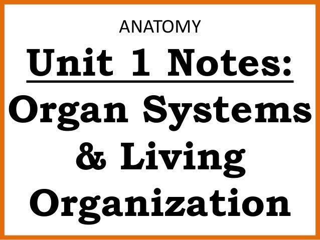ANATOMY Unit 1 Notes: Organ Systems & Living Organization