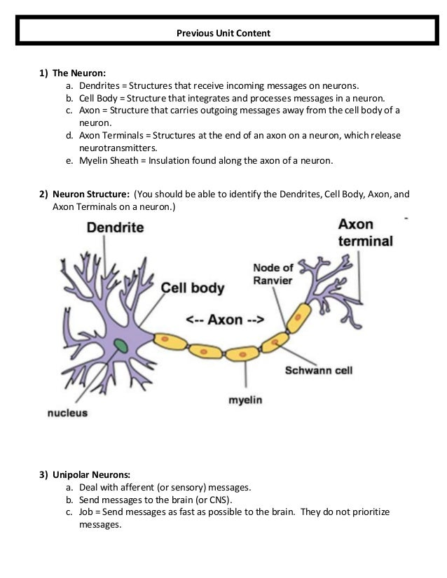 Anatomy Unit 2 Nervous System Everything You Need To Know And Drill Questions For Quiz 3 on Cell Structure And Function Worksheet
