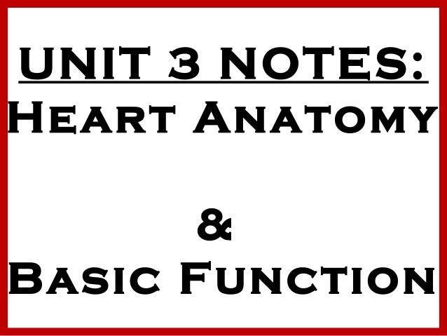 UNIT 3 NOTES: Heart Anatomy & Basic Function