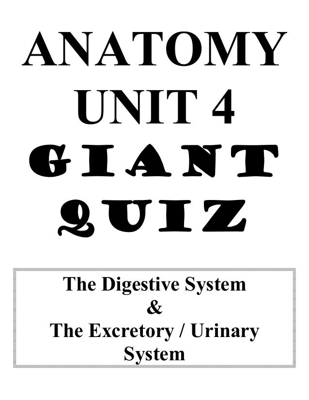 Anatomy unit 4 digestive and excretory systems big quiz