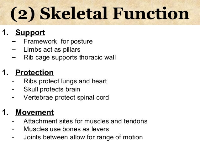 A study on the bone structure and functions of the skeleton College ...