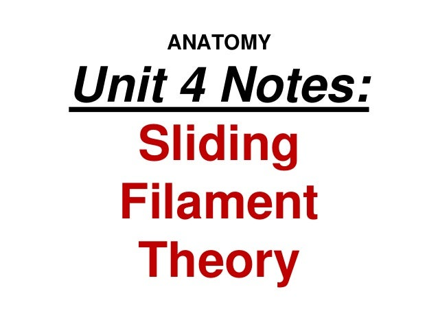 ANATOMY Unit 4 Notes: Sliding Filament Theory