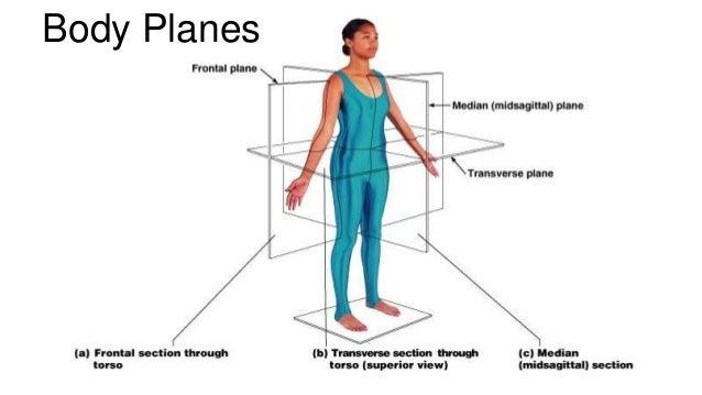 central nervous system worksheet