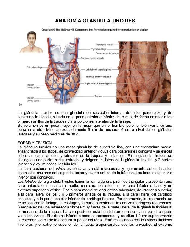 ANATOMÍA GLÁNDULA TIROIDESLa glándula tiroides es una glándula de secreción interna, de color pardorojizo y deconsistencia...