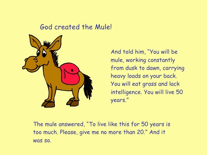"God created the Mule! And told him, ""You will be mule, working constantly from dusk to dawn, carrying heavy loads on your ..."