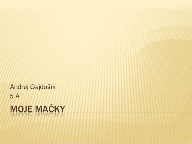 MOJE MAČKYAndrej Gajdošík5.A