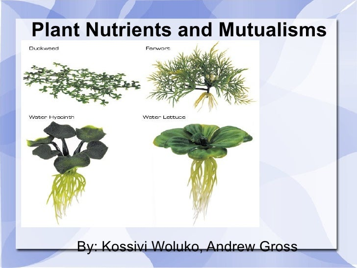 Plant Nutrients and Mutualisms By: Kossivi Woluko, Andrew Gross
