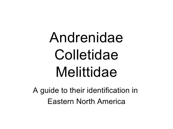 Andrenidae Colletidae Melittidae A guide to their identification in  Eastern North America