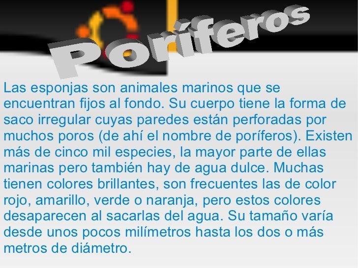 PORÍFEROS (Andrés y Paco)
