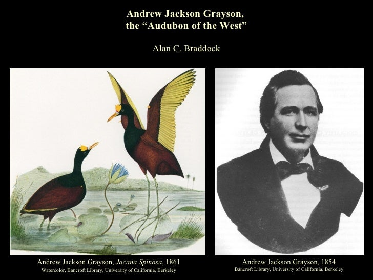 "Andrew Jackson Grayson,  the ""Audubon of the West"" Alan C. Braddock Andrew Jackson Grayson,  Jacana Spinosa , 1861 Waterco..."