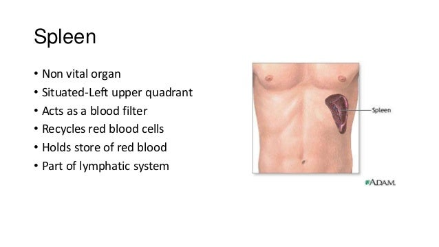 Clinical Examination Of The Gi Tract And Abdomen