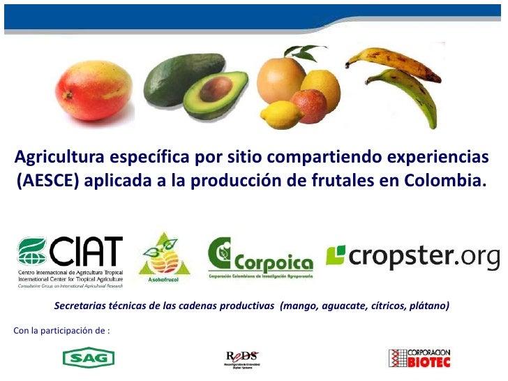 Agricultura específica por sitio compartiendo experiencias (AESCE) aplicada a la producción de frutales en Colombia.<br />...