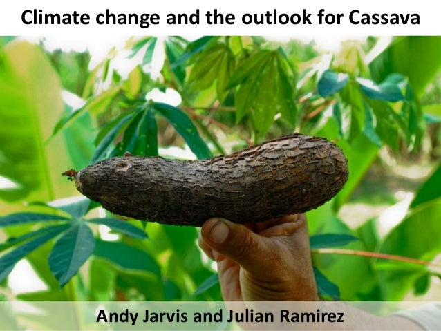 Climate change and the outlook for Cassava Andy Jarvis and Julian Ramirez