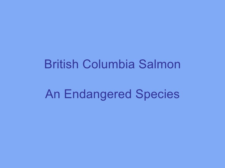 British Columbia Salmon  An Endangered Species