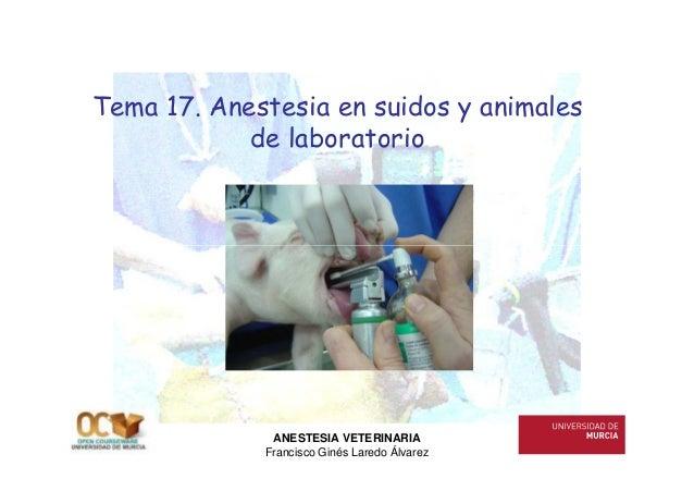 Tema 17. Anestesia en suidos y animales            de laboratorio              ANESTESIA VETERINARIA             Francisco...