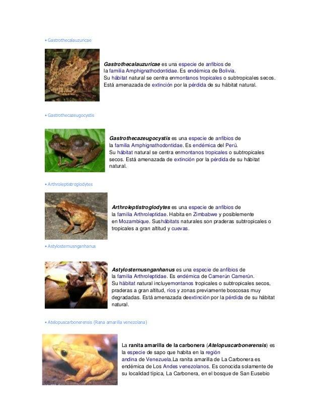 • Gastrothecalauzuricae Gastrothecalauzuricae es una especie de anfibios de la familia Amphignathodontidae. Es endémica de...