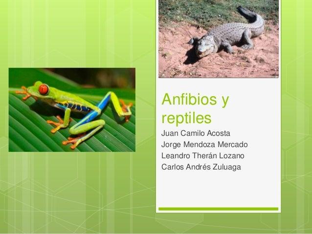 Anfibios y reptiles Juan Camilo Acosta Jorge Mendoza Mercado Leandro Therán Lozano Carlos Andrés Zuluaga