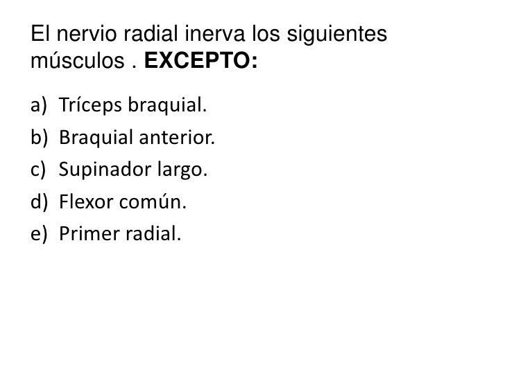 El nervio radial inerva los siguientes músculos . EXCEPTO:<br />Tríceps braquial.<br />Braquial anterior.<br />Supinador l...