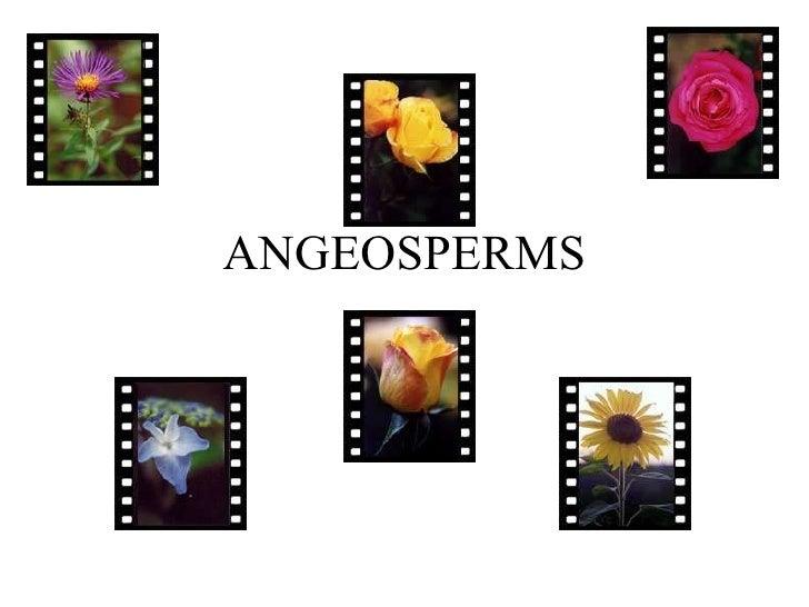 Angeosperms