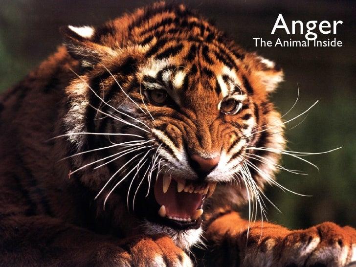 Anger The Animal Inside