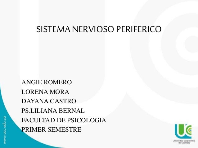 SISTEMANERVIOSOPERIFERICO ANGIE ROMERO LORENA MORA DAYANA CASTRO PS.LILIANA BERNAL FACULTAD DE PSICOLOGIA PRIMER SEMESTRE