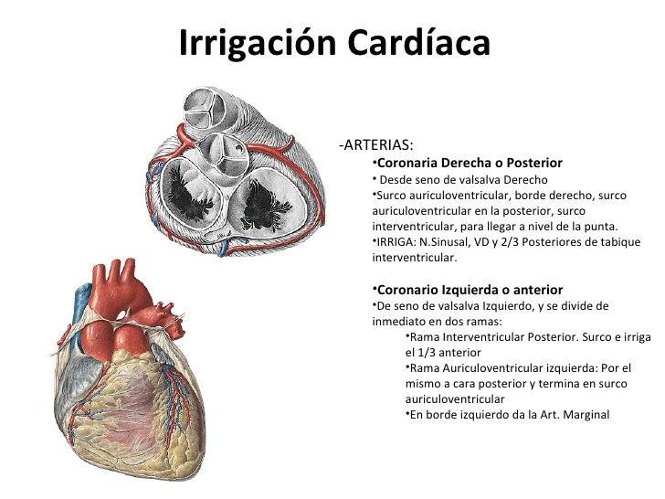 lo sono le coronarie