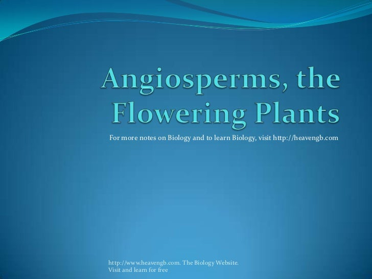 Angiospermss