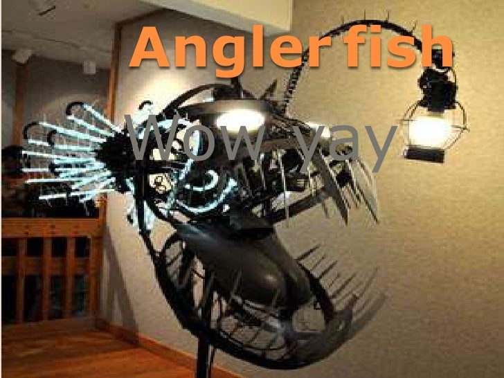 Angler fishWow yay