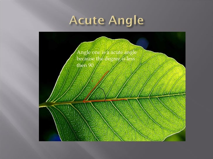 Acute Triangle In Nature Angles in nature 2