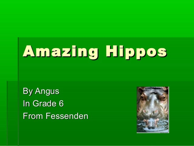 Amazing HipposAmazing Hippos By AngusBy Angus In Grade 6In Grade 6 From FessendenFrom Fessenden
