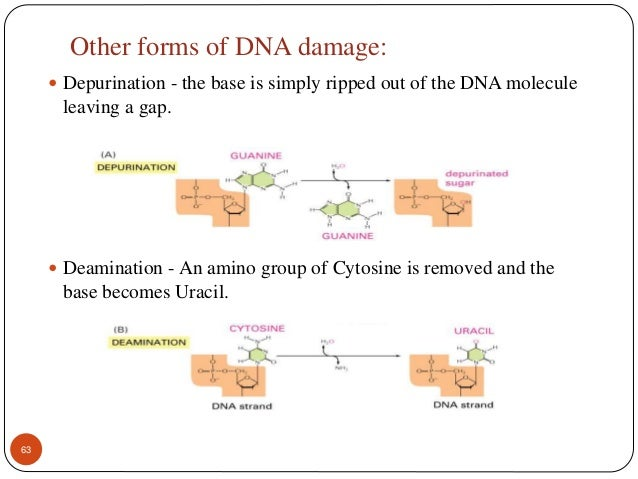 research paper on dna testing Writing master thesis papers dna research paper dissertation on using dna evidence through dna testingdna analysis this research paper dna analysis.
