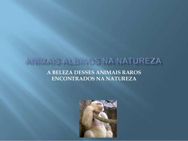 A BELEZA DESSES ANIMAIS RAROS ENCONTRADOS NA NATUREZA