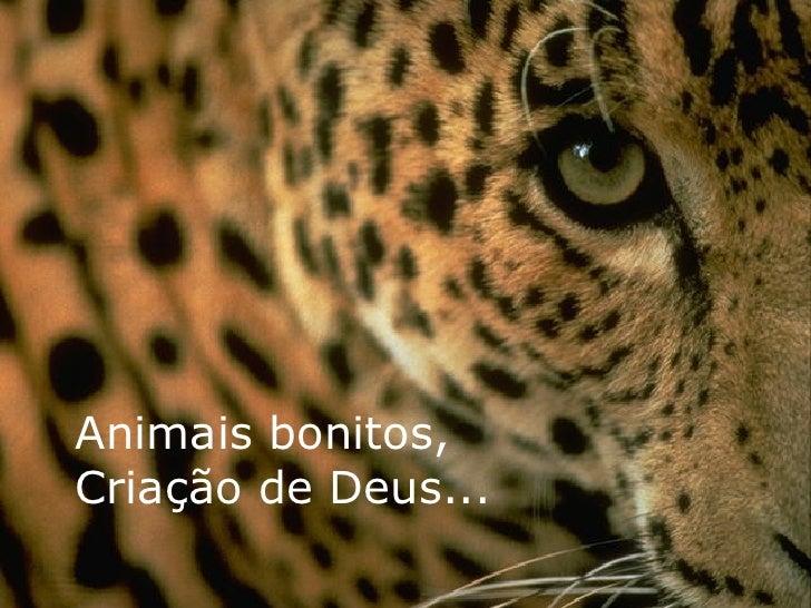 Animais bonitos, Criação de Deus...
