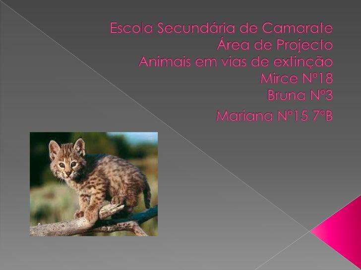 Animais Em Vias De Extinção