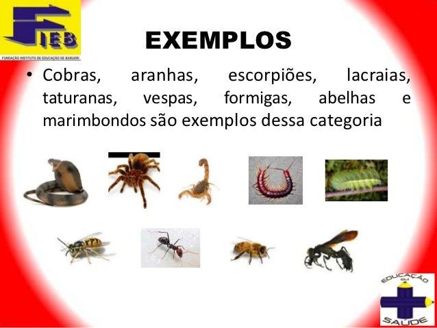 EXEMPLOS• Cobras,   aranhas,   escorpiões,   lacraias, taturanas, vespas, formigas, abelhas       e marimbondos são exempl...