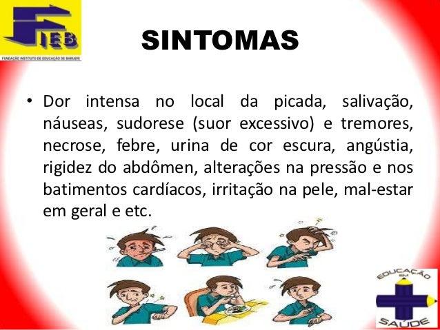 SINTOMAS• Dor intensa no local da picada, salivação,  náuseas, sudorese (suor excessivo) e tremores,  necrose, febre, urin...