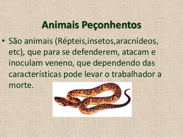 Animais perçonhentos