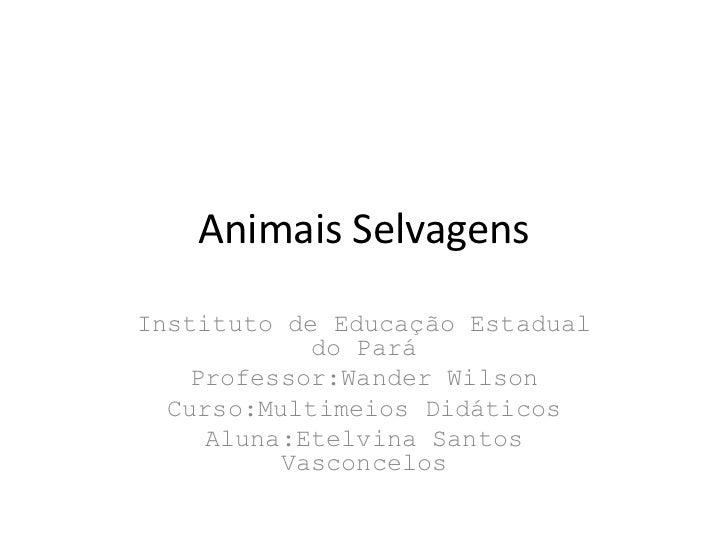 Animais SelvagensInstituto de Educação Estadual            do Pará   Professor:Wander Wilson  Curso:Multimeios Didáticos  ...
