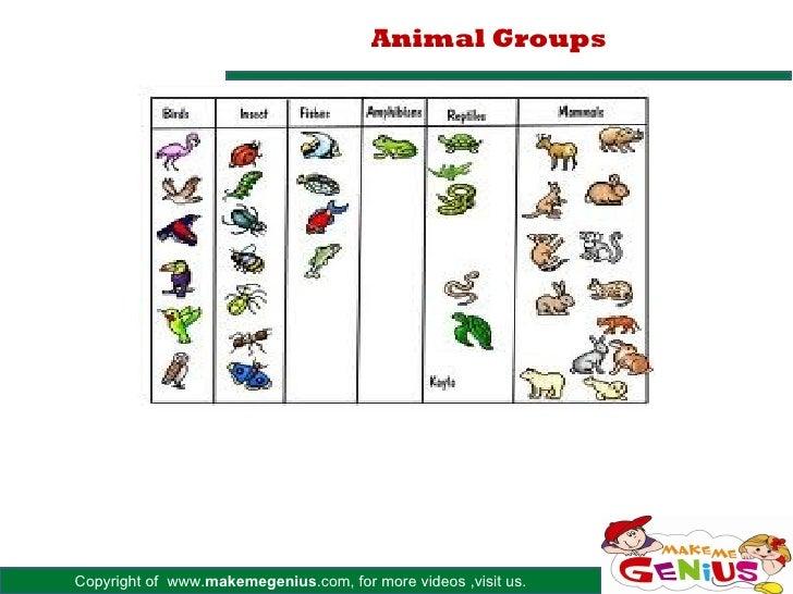 Animal GroupsCopyright of www.makemegenius.com, for more videos ,visit us.
