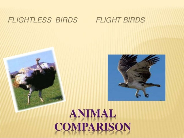 ANIMAL COMPARISON FLIGHTLESS BIRDS FLIGHT BIRDS