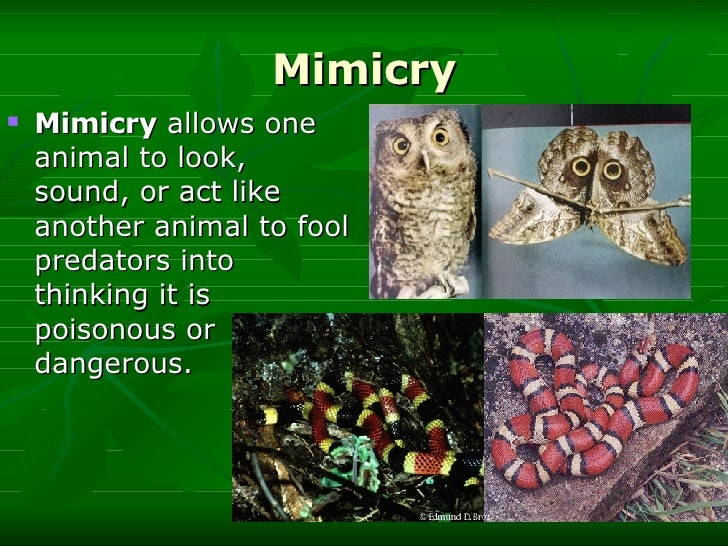 Homework help mimicry camouflage
