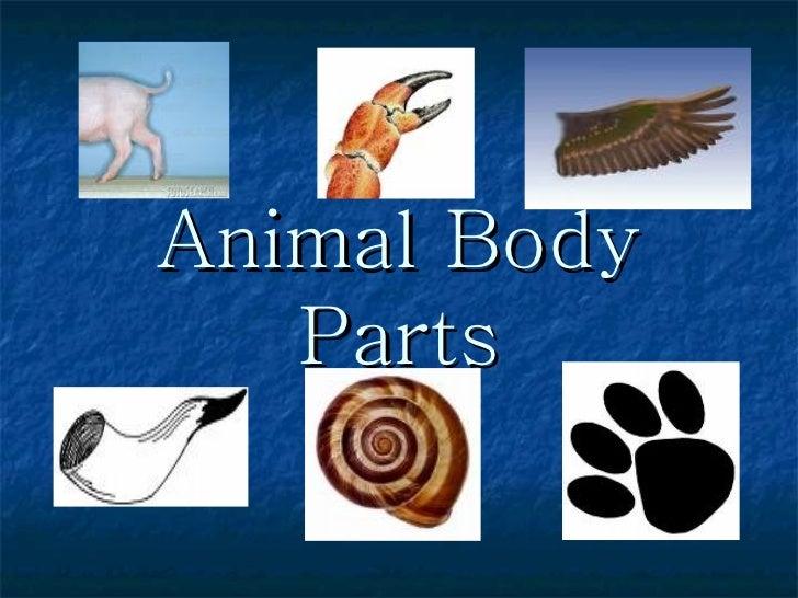 Animal body-parts