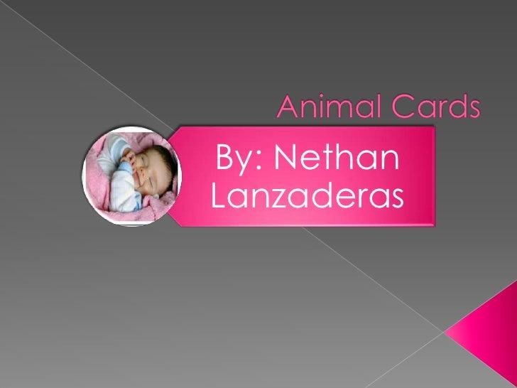 Animal Cards<br />