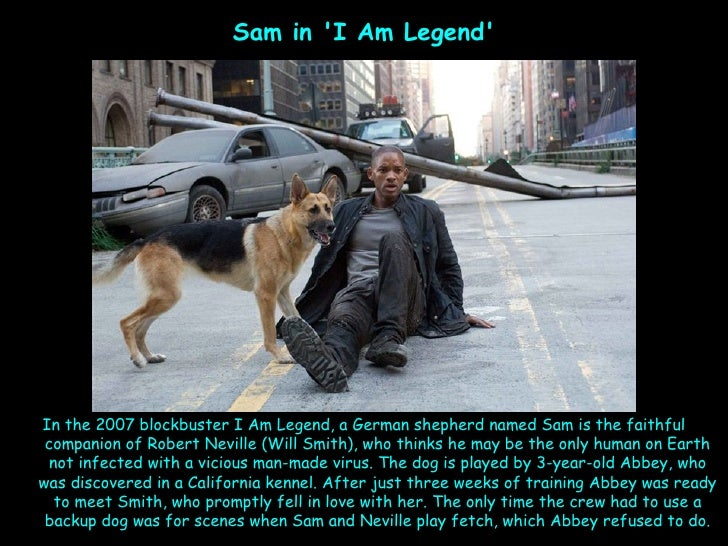 I am legend sam the dog