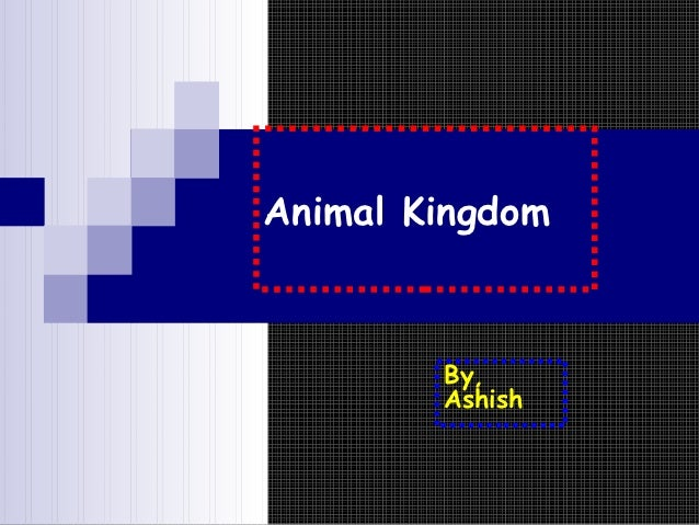 Animal Kingdom        By,        Ashish