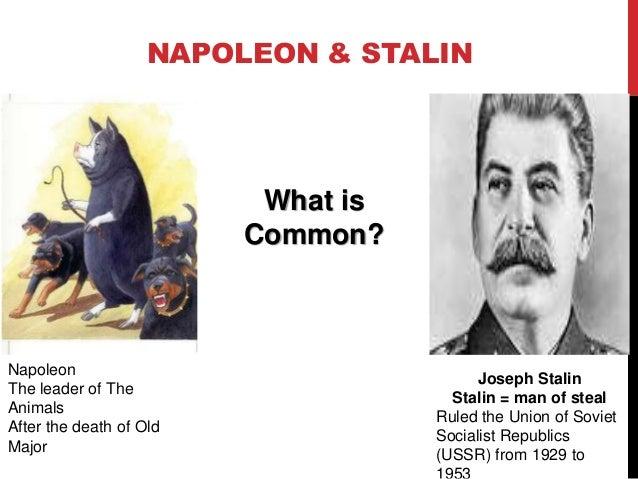 Napoleon animal farm essay