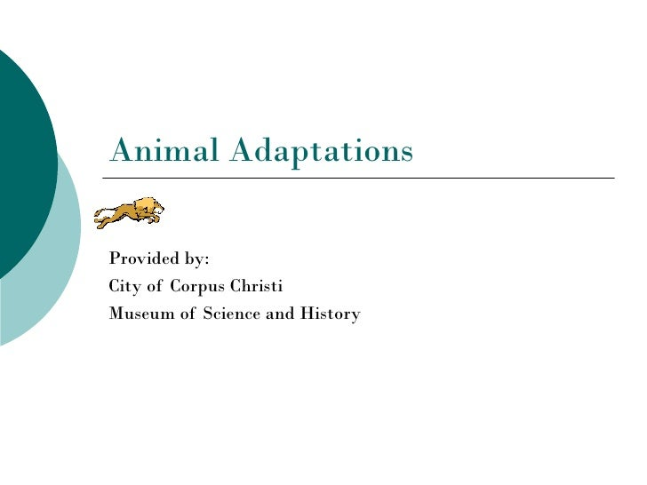 Animal AdaptationsProvided by:City of Corpus ChristiMuseum of Science and History